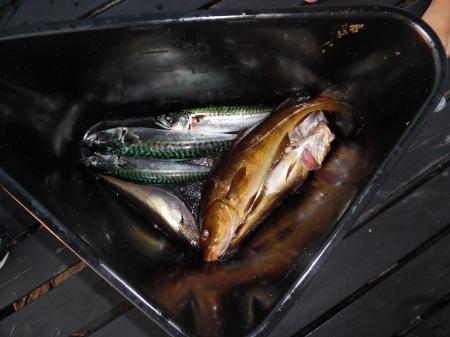 Fiskefångsten